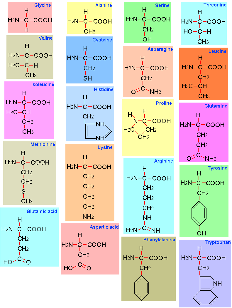 STRUCTURES OF 20 AMINO ACIDS EPUB DOWNLOAD